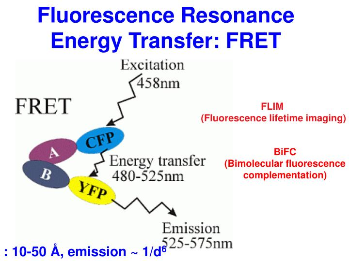 Fluorescence Resonance Energy Transfer: FRET