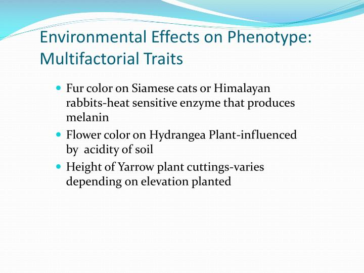Environmental Effects on Phenotype: Multifactorial Traits