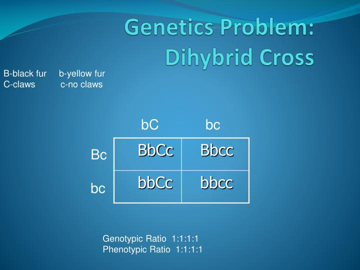 Genetics Problem: Dihybrid Cross