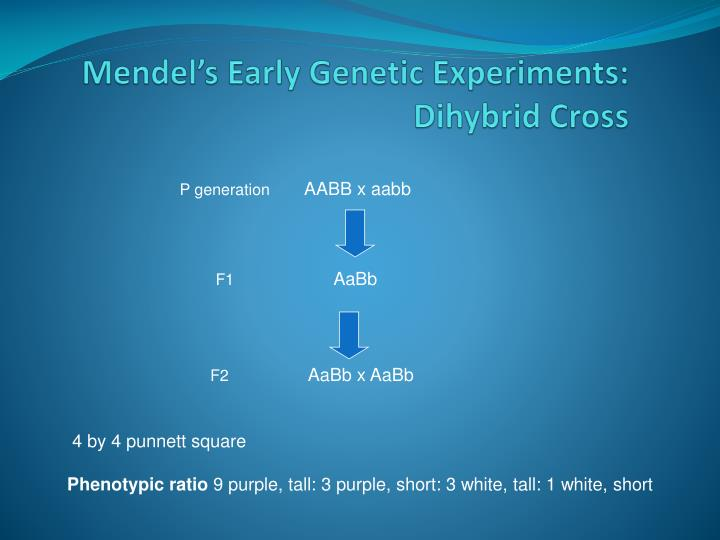 Mendel's Early Genetic Experiments: Dihybrid Cross