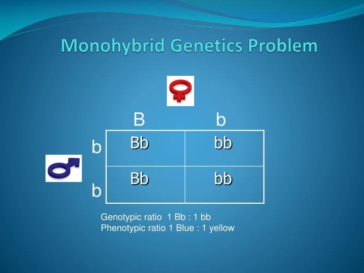 Monohybrid Genetics Problem