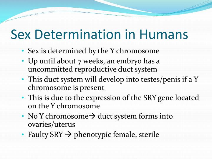 Sex Determination in Humans