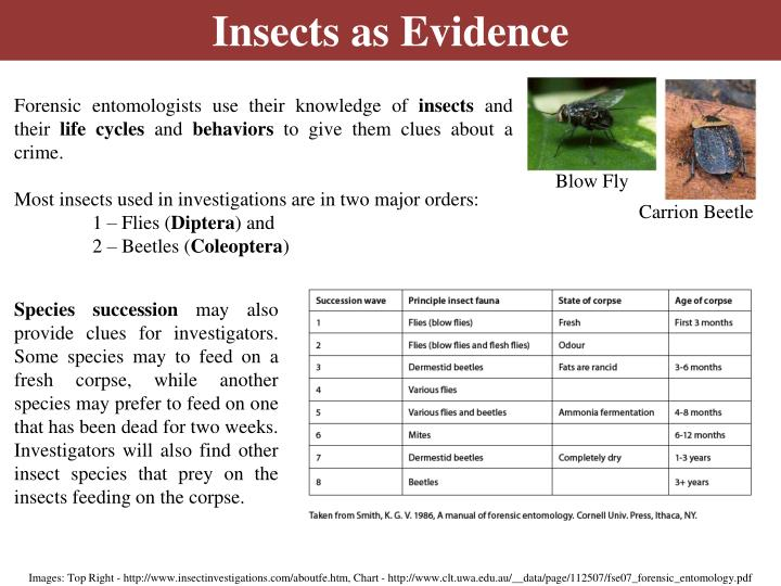 Insects as Evidence