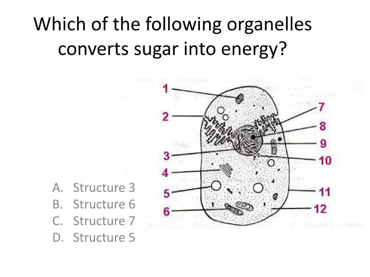 Which of the following organelles