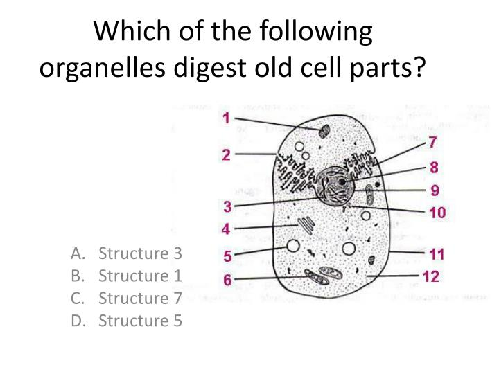 Which of the following organelles digest old cell parts?