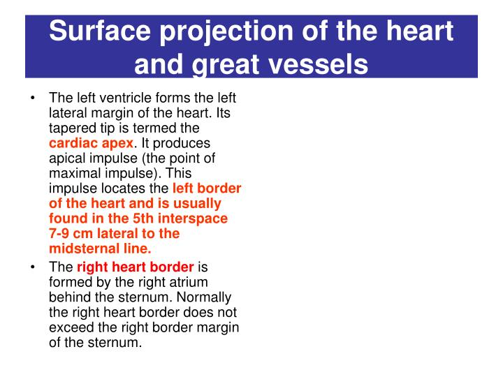 Surface projection of the heart and great vessels1