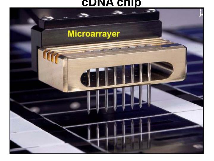cDNA chip