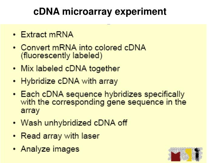 cDNA microarray experiment