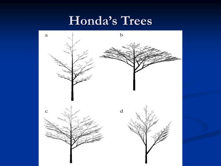 Honda's Trees