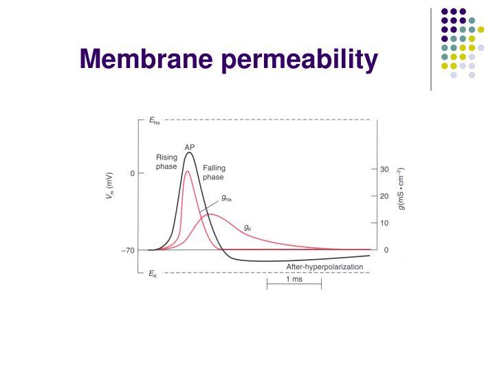 Membrane permeability