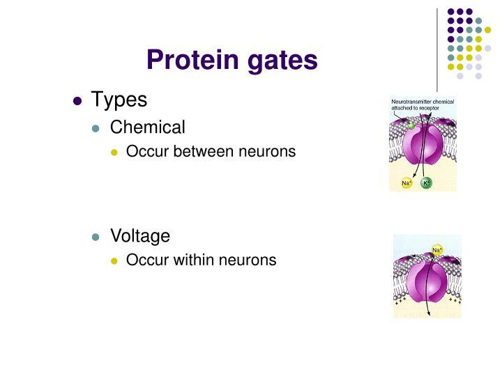 Protein gates