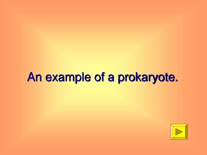 An example of a prokaryote.