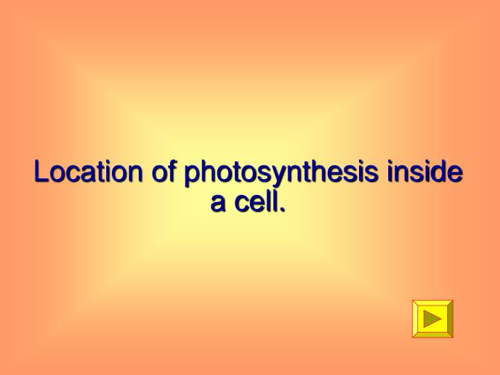 Location of photosynthesis inside a cell.
