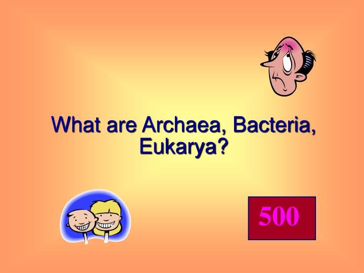What are Archaea, Bacteria, Eukarya?