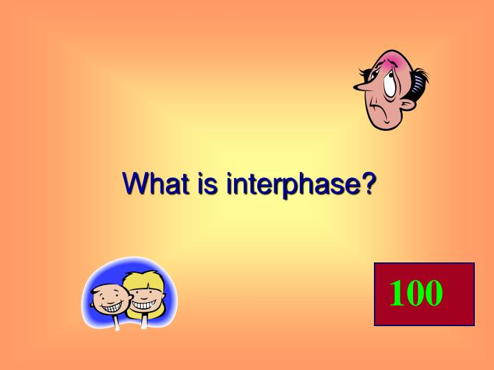 What is interphase?