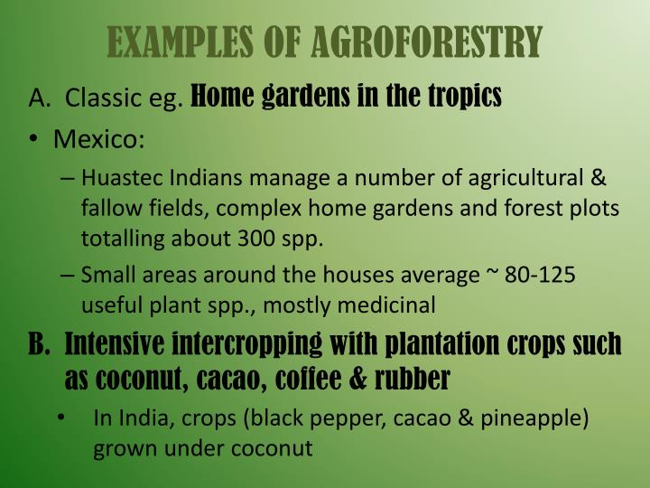 EXAMPLES OF AGROFORESTRY
