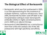 the biological effect of bortezomib