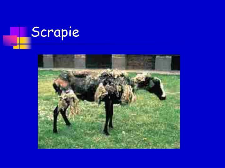 Scrapie