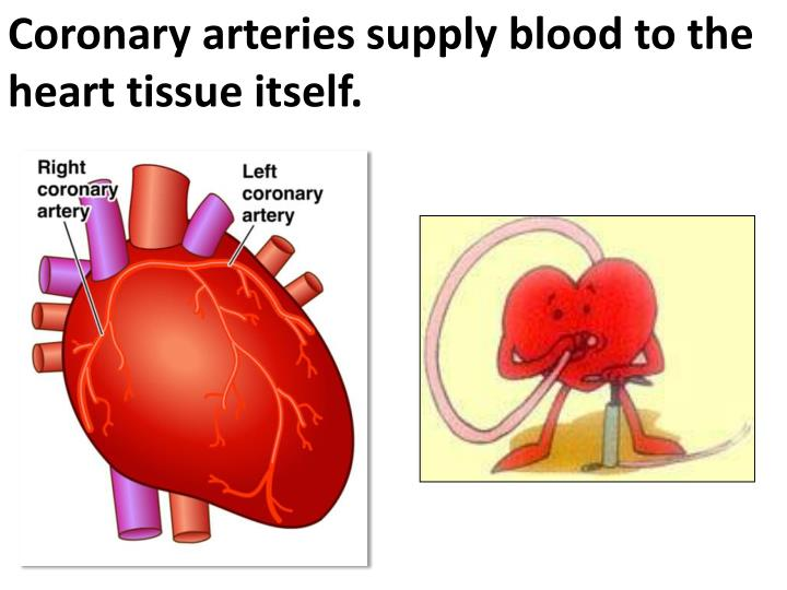 Coronary arteries supply blood to the heart tissue itself.