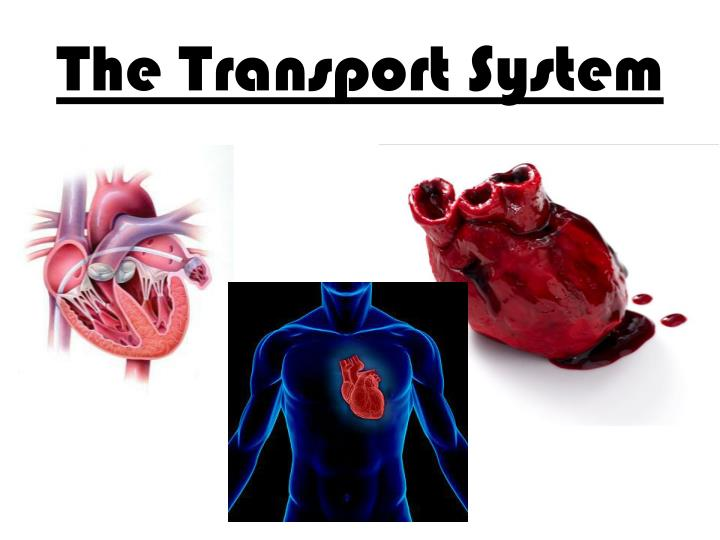 The Transport System