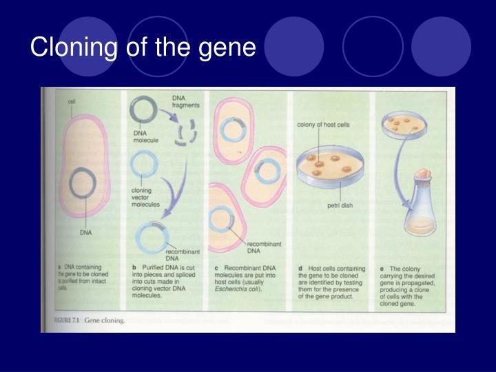 Cloning of the gene