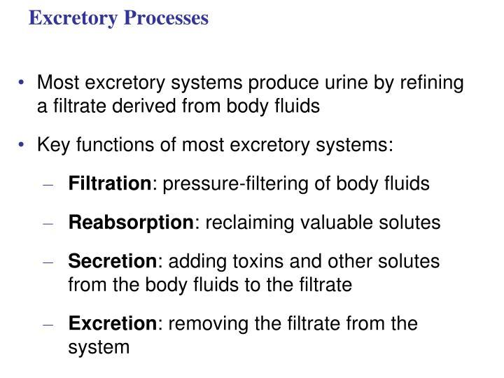 Excretory Processes
