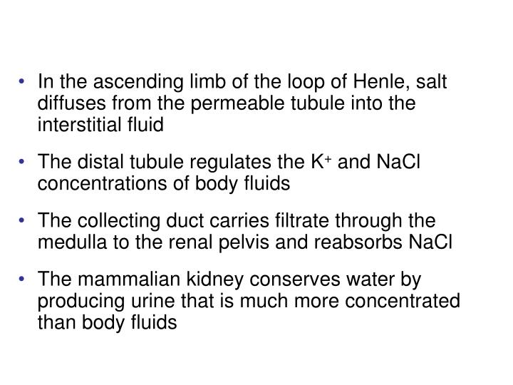 In the ascending limb of the loop of Henle, salt diffuses from the permeable tubule into the interstitial fluid
