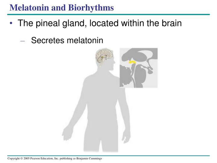 Melatonin and Biorhythms
