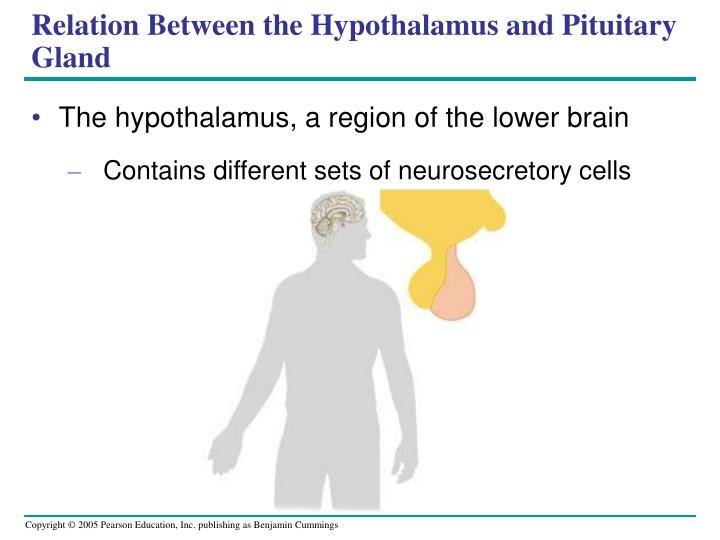 Relation Between the Hypothalamus and Pituitary Gland