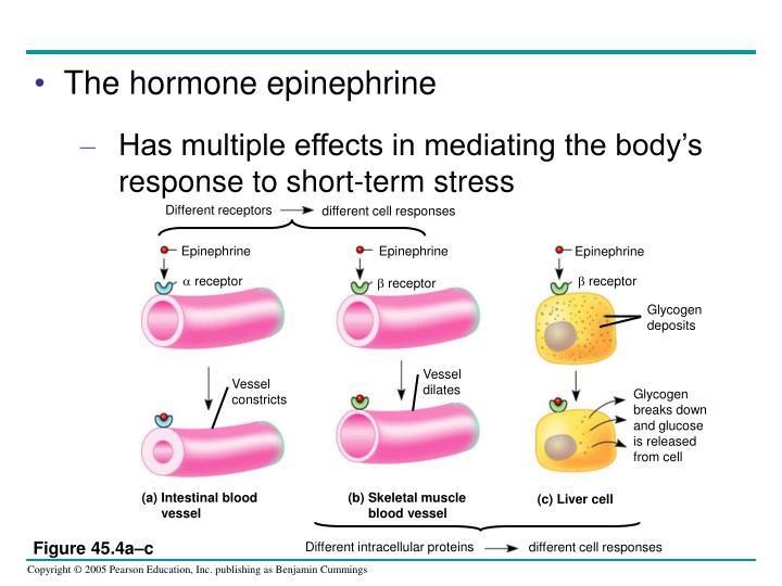 Different receptors
