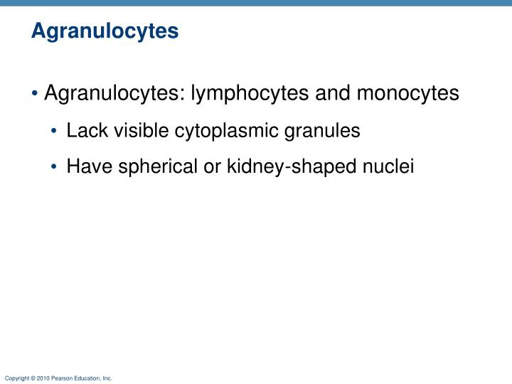Agranulocytes