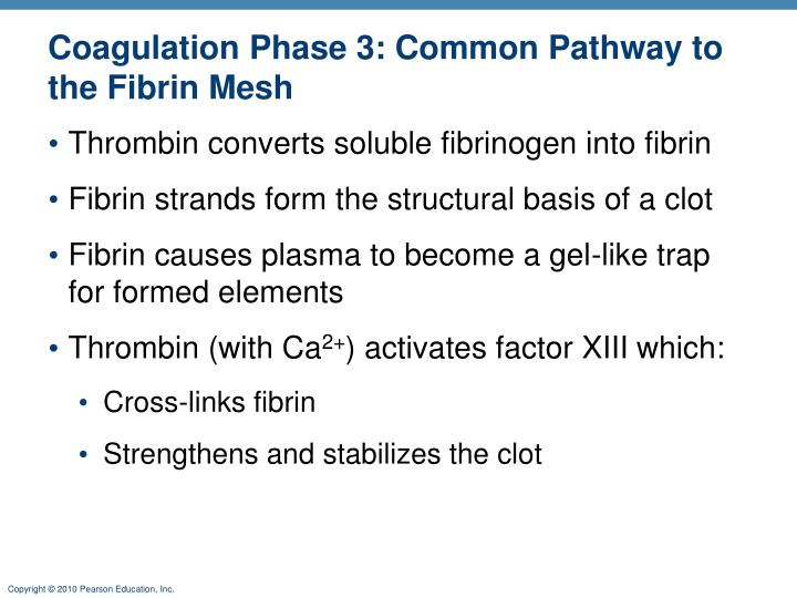 Coagulation Phase 3: Common Pathway to the Fibrin Mesh