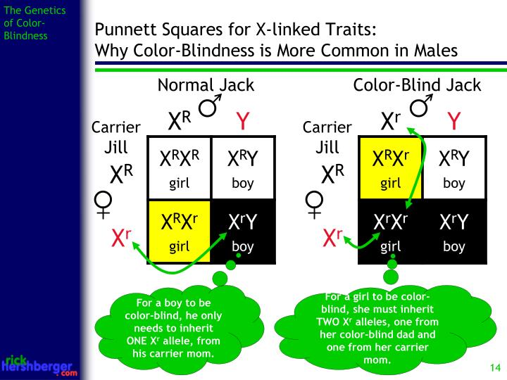 PPT - The Genetics of Color-Blindness PowerPoint Presentation - ID ...