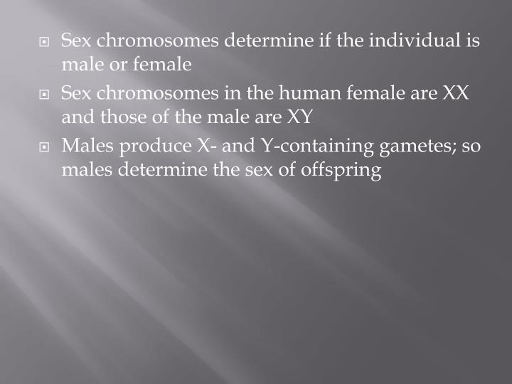 Sex chromosomes determine if the individual is male or female