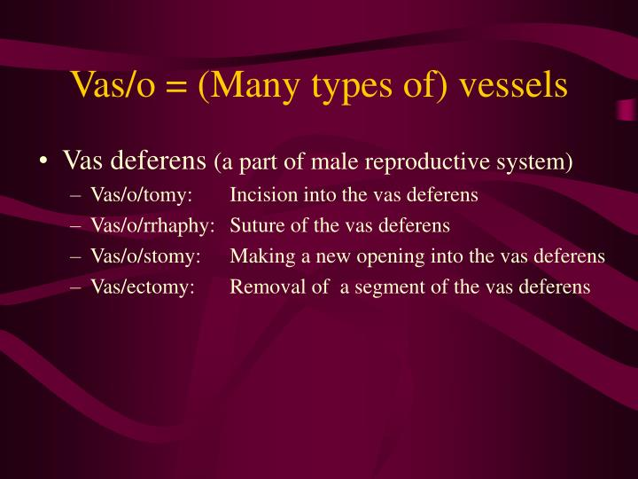 Vas/o = (Many types of) vessels
