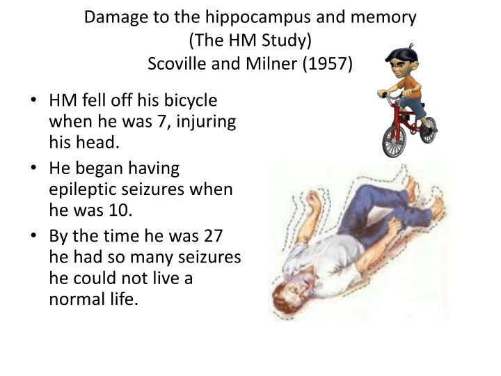 Damage to the hippocampus and memory