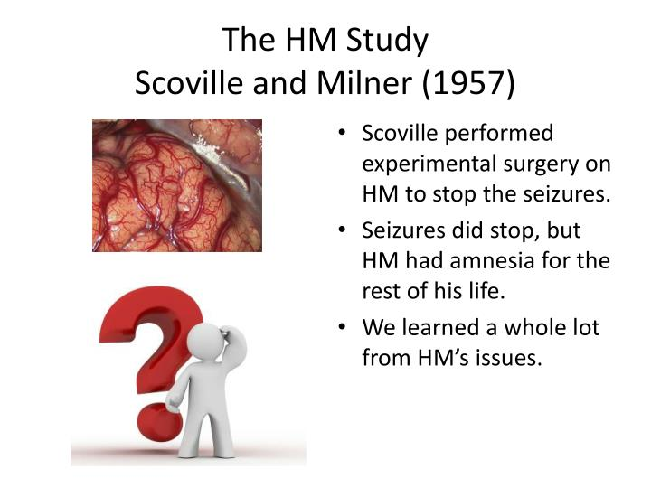 The hm study scoville and milner 1957