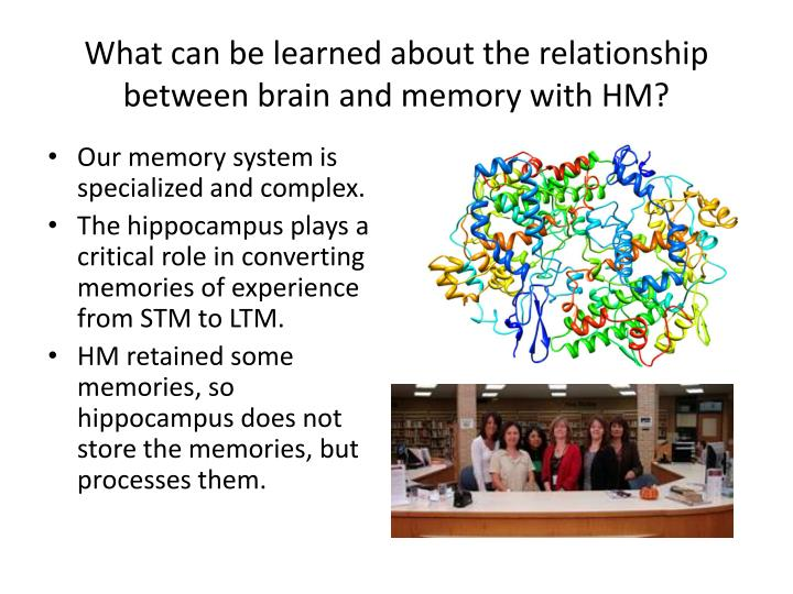 What can be learned about the relationship between brain and memory with HM?