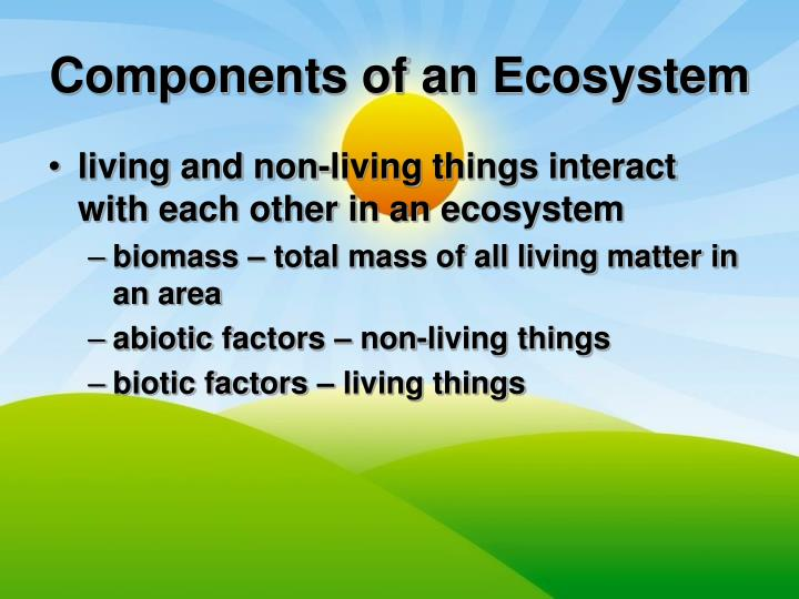 Components of an ecosystem