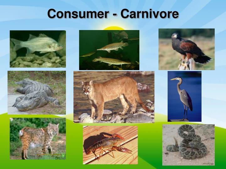 Consumer - Carnivore
