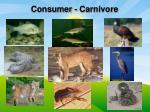 consumer carnivore