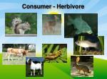 consumer herbivore