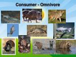 consumer omnivore