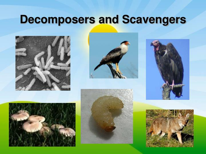 Decomposers and Scavengers