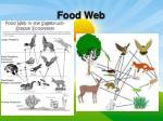 food web1