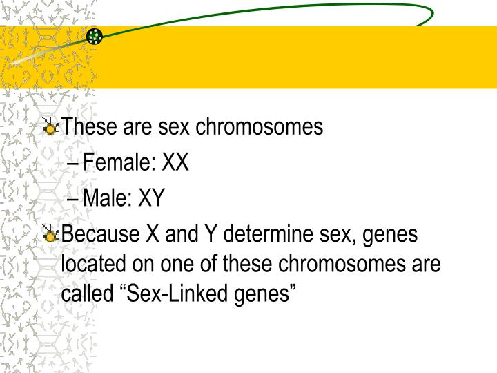 These are sex chromosomes