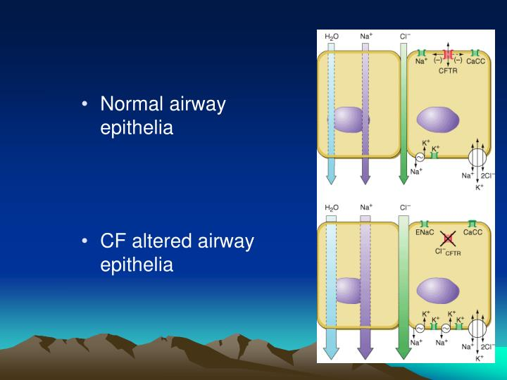 Normal airway epithelia