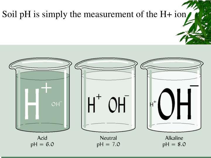 Soil pH is simply the measurement of the H+ ion