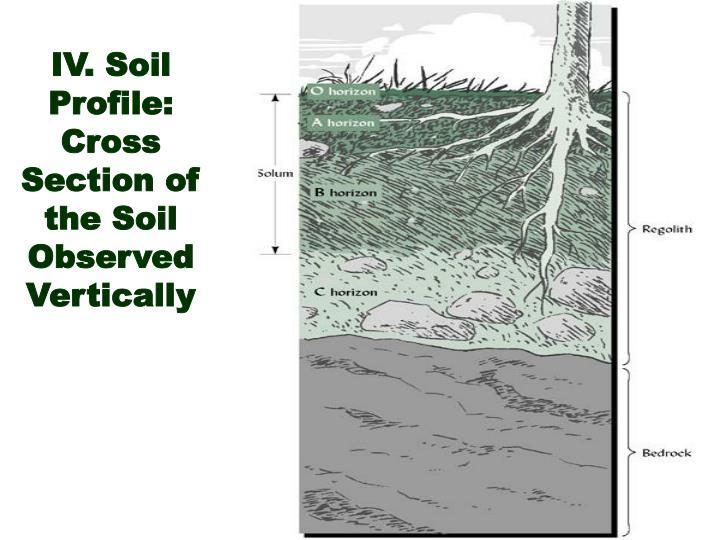 IV. Soil Profile: