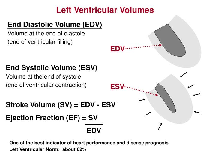 Left Ventricular Volumes